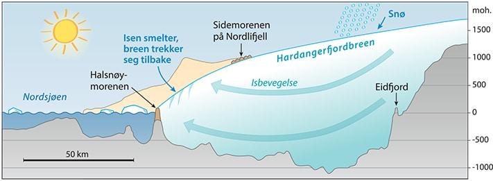 Lengdeprofi l av Hardangerfjordbreen under yngre dryas. Utenfor breen viser beige farge et skjematisk profi l av fjellene ut til kysten. Likevektslinjen, altså grensen mellom området med årlig akkumulasjon av snø og området med overskudd av smelting, lå den gang 630 m lavere enn i dag.  Grafikk: Eva Bjørseth