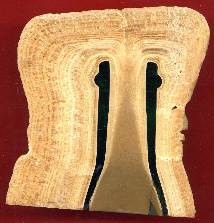 Tverrsnitt igjennom en stalagmittmasse som omslutter en vinflaske som har ligget inne i kalksteinsgrotte flere tiår i Frankrike før den ble tatt ut. Lagene vi ser er årslag og viser med all tydelighet at avsetingen går raskere i et varmt klima. Foto: Dominique Genty