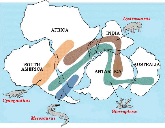 Funnsteder av fire forskjellige utdødde arter som i dag finnes på vidt adskilte kontinenter.