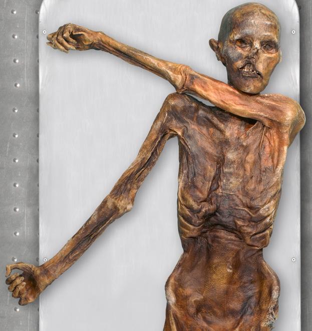Nærbilde av Ötzis kropp. Foto: Halfdan Carstens
