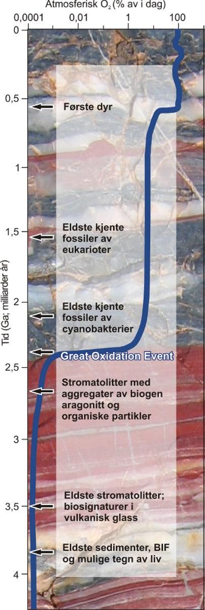 Jorden er nesten 4,6 milliarder år gammel. Spor etter liv er likevel sparsomt fra de første fire milliarder årene (prekambrium). Den blå kurven viser endringer i atmosfærens oksygeninnhold over tid. Legg merke til at skalaen er logaritmisk. Dagens nivå representerer her 100 % (21 % oksygen). Gjennom de første to milliarder år er oksygeninnholdet nærmest neglisjerbart. Etter The Great Oxidation Event øker oksygennivået til 1-40 prosent av dagens nivå. Den neste store økningen skjer ved overgangen mellom prekambrium og kambrium og kan settes i sammenheng med oppblomstringen av livet i havet i kambrium. Illustrasjon: Aave Lepland