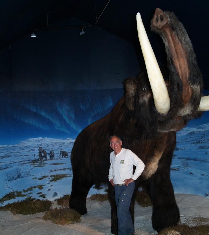 Du blir ganske liten i forhold til en velvoksen mammut. Inne i Mammuthus finner du en kopi av Beresovka-mammuten fra Sibir – for anledningen kledd i moskusskinn fra Grønland – som i 1900 helt tilfeldig ble funnet av en jeger som bare var interessert i tennene. Året etter ble den gravd ut, og i dag er den tatt vel vare på i et museum i St. Petersburg. Dette mannlige eksemplaret av arten ble 35-40 år gammel og døde i en ulykke for mellom 29.000 og 33.000 år siden. I Norge er det gjort 21 funn av mammutknokler, 19 av dem i Gudbrandsdalen. Hele skjeletter er ikke funnet her hjemme. Foto: Halfdan Carstens