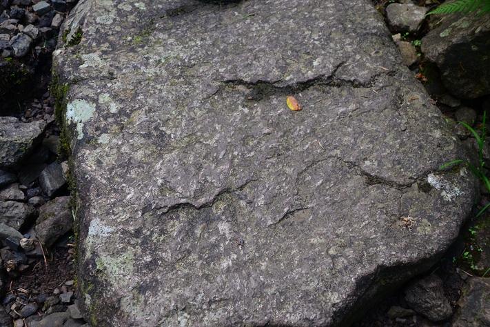 Rombeporfyr i løsblokk i Asdøljuvet. På de mange elvekrysningene faller det naturlig å skritte fra stein til stein, og da er det rikelig anledning til å bli kjent med denne lavabergarten som kun finnes noen få steder i verden.  Foto: Halfdan Carstens